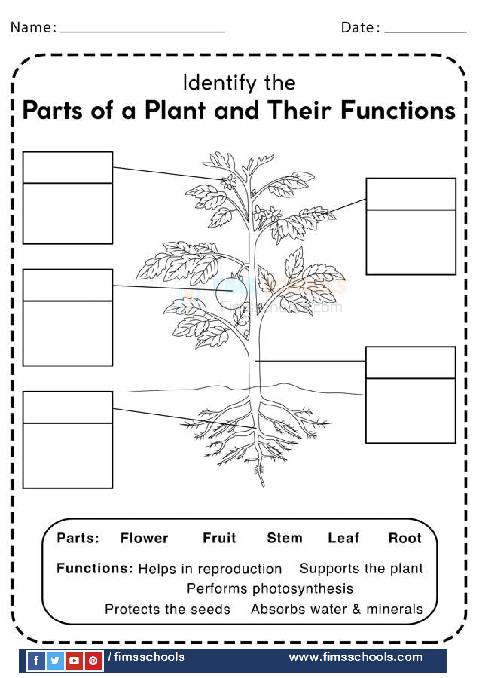 Fims Parts-of-Plants-and-Their-Functions-Worksheet-1